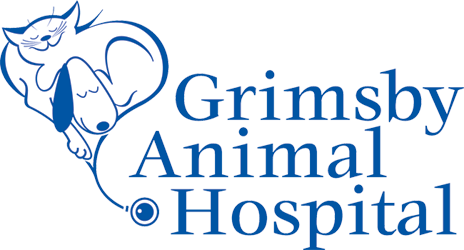 Logo for Grimsby Animal Hospital in Grimsby, Ontario