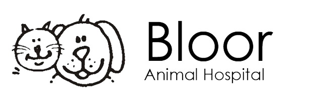 Bloor West Veterinarians in Toronto, Ontario | Bloor Animal Hospital