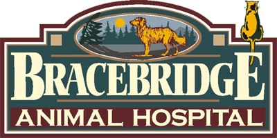 Logo for Veterinarians Bracebridge Ontario | Bracebridge Animal Hospital