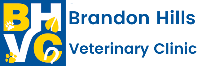 Brandon, MB Veterinarian Animal Clinic | Brandon Hills Veterinary Clinic