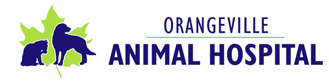 Logo for Veterinarians Orangeville | Orangeville Animal Hospital
