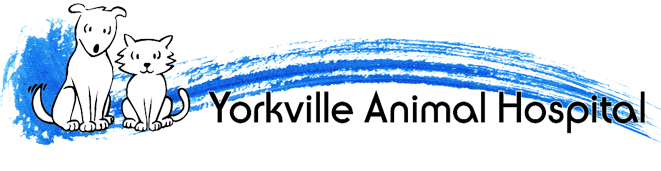 Logo for Yorkville Animal Hospital | Your local veterinarian in Toronto, Ontario